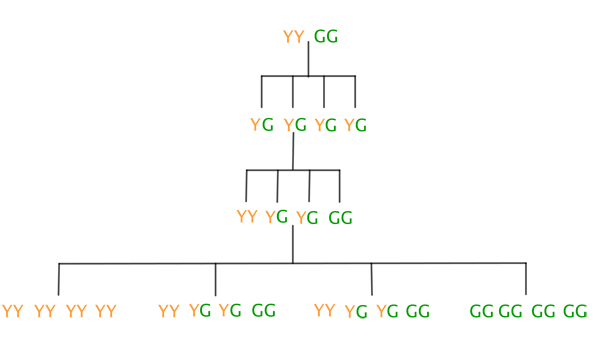 Gene distribution diagram
