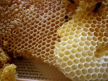 Plus advent calendar door #24: The sagacity of bees