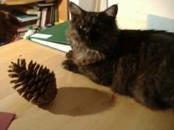 A cat and a pine cone with shadow