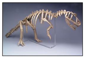 <i>Allosaurus skeleton</i> made by Robert J. Lang from 16 uncut squares of Wyndstone 'Marble' paper. Size: 24 inches. Image courtesy <a href='http://www.langorigami.com'>Robert J. Lang</a>.
